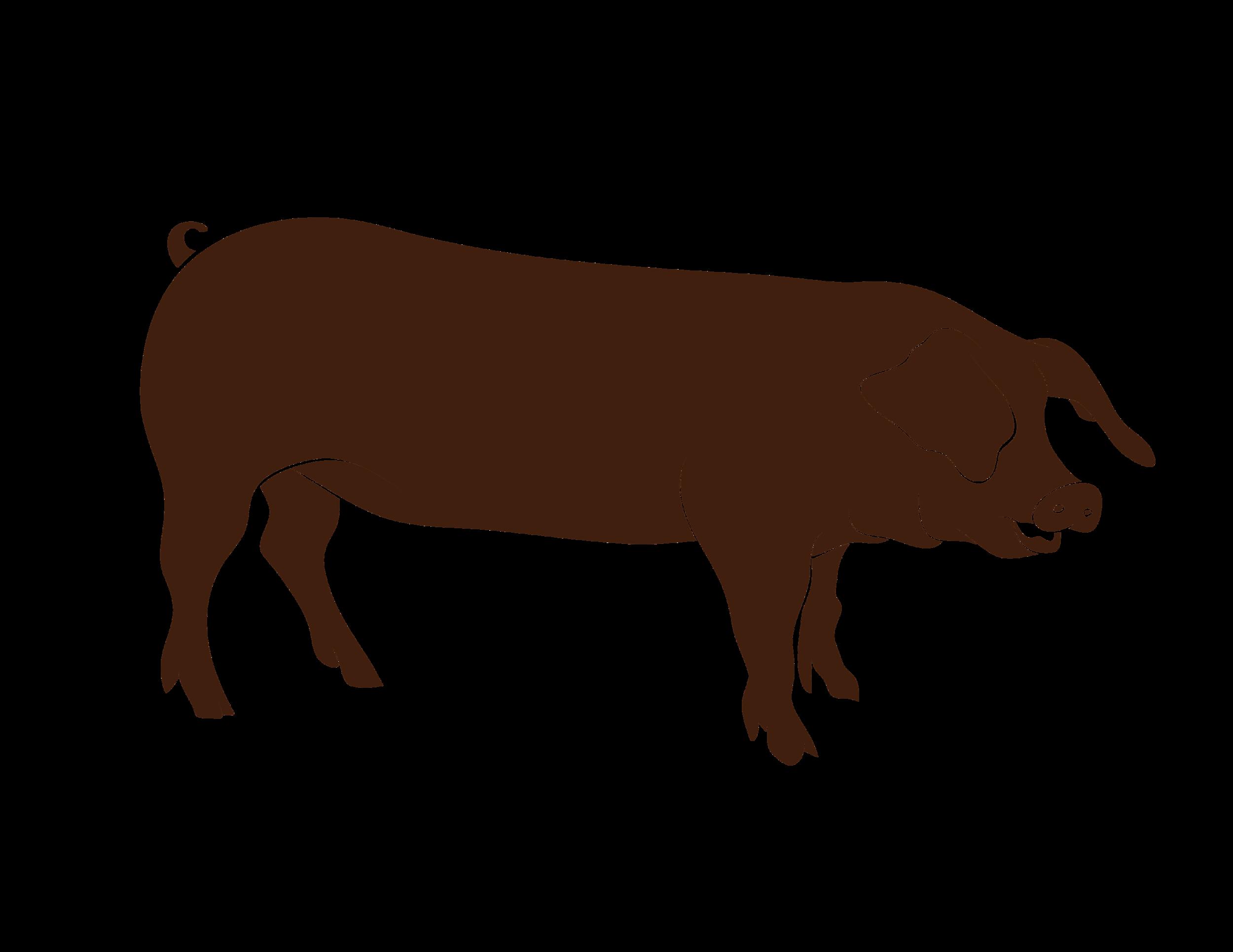 Roaster Pig-01.png