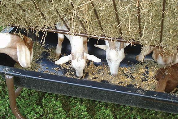 Sheep/Goat Feeder w/Hay Rack