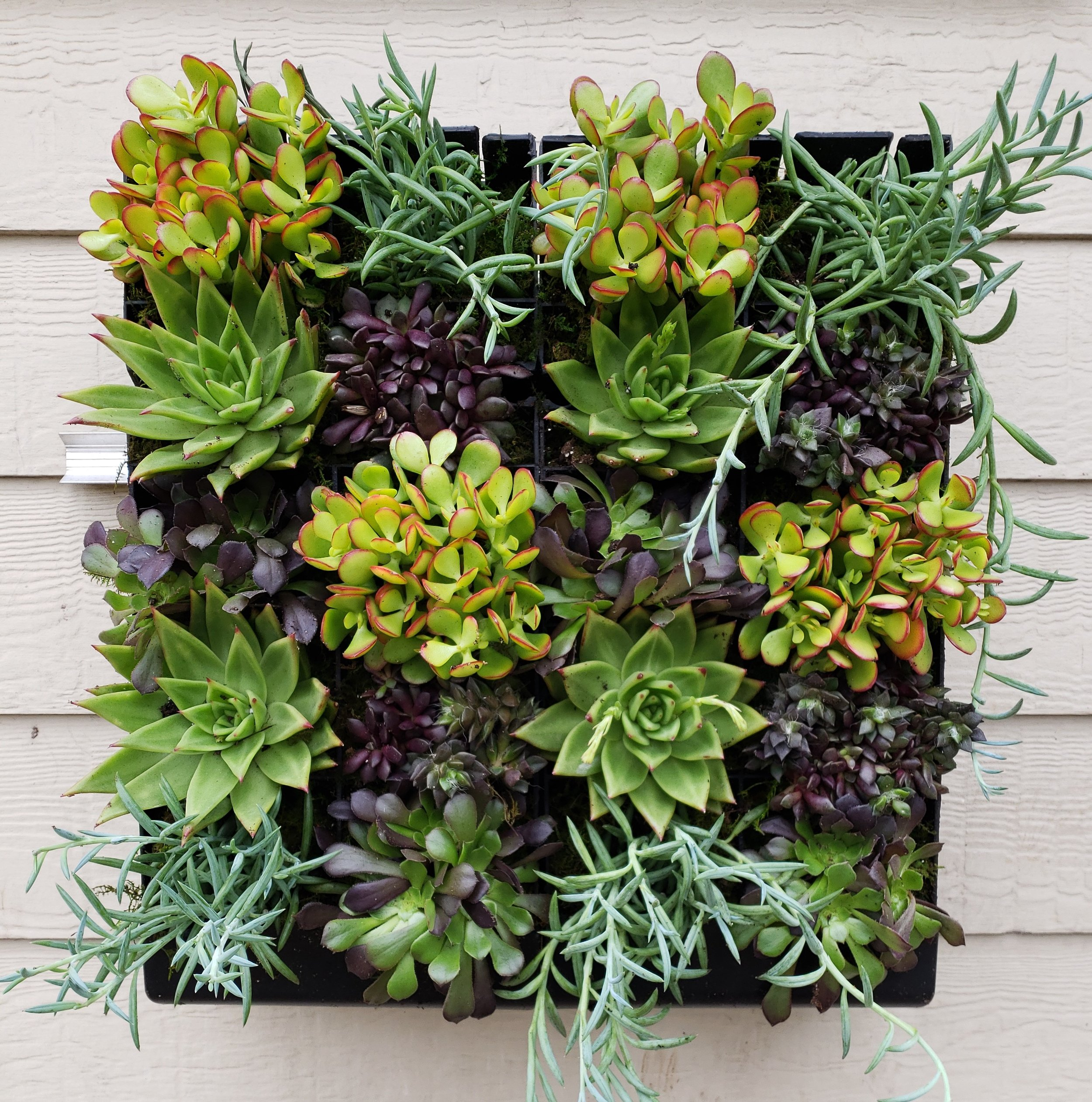 Succulent Collection Grovert Living Wall Planter Edible Walls