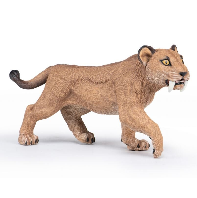 55081+Young+Smilodon+late+2021.JPG?format=2500w