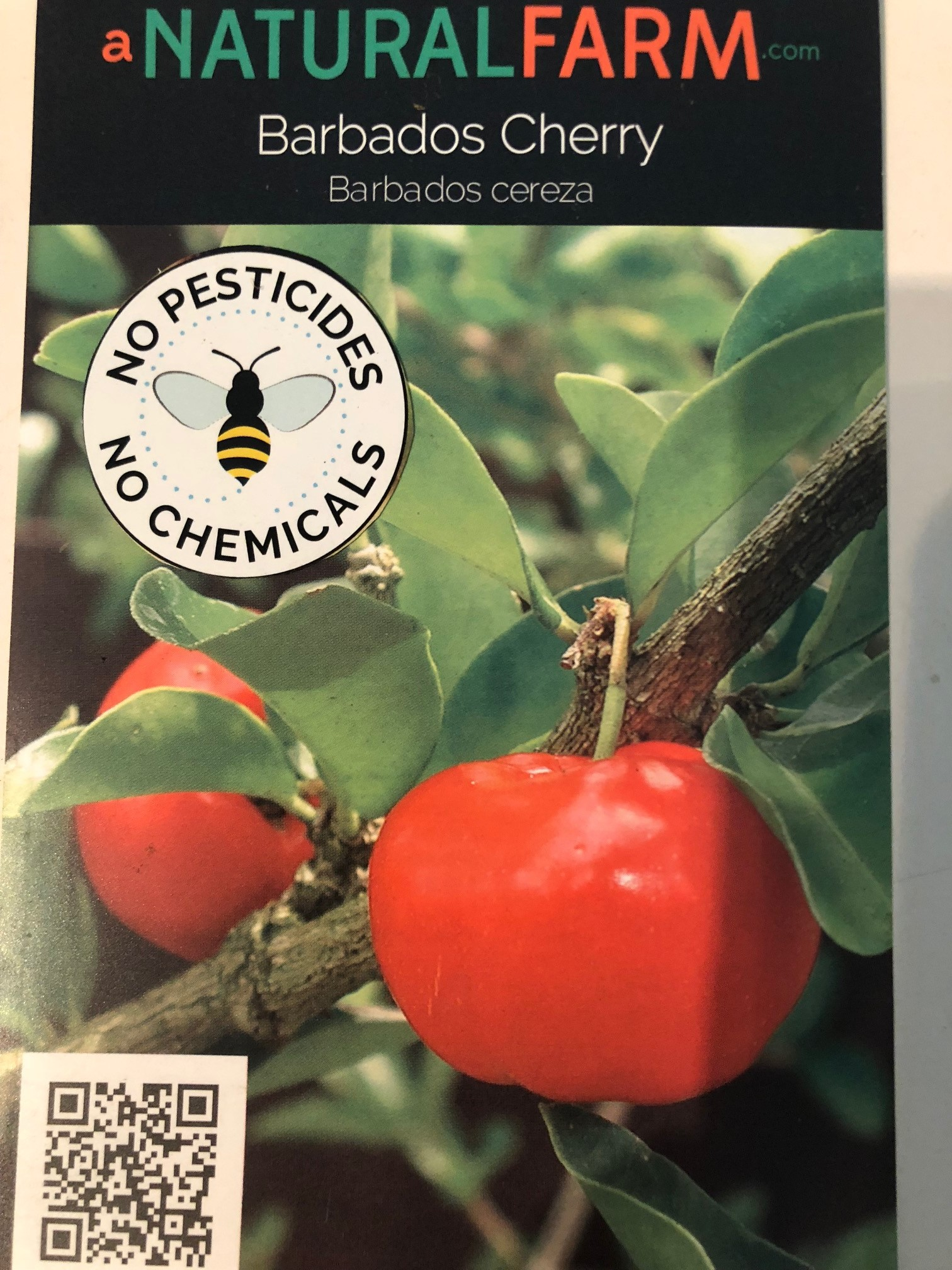 Barbados Cherry — A Natural Farm