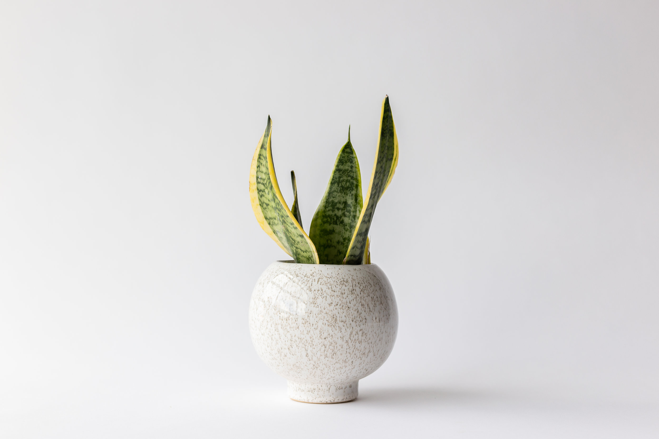 Bloomingville Large Round Flower Pot — FERN | Plant design, Home goods,  Classes, Event space