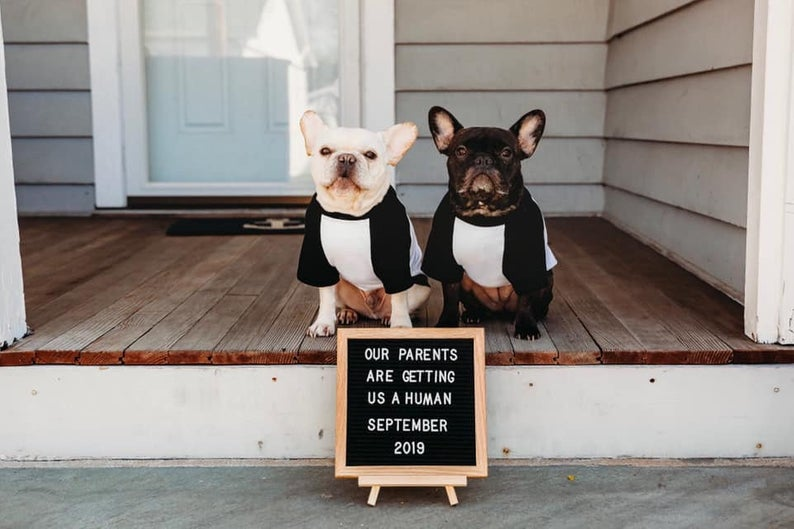 My Big Brother is a French Bulldog// My Big Sister Dog Baby Announcement