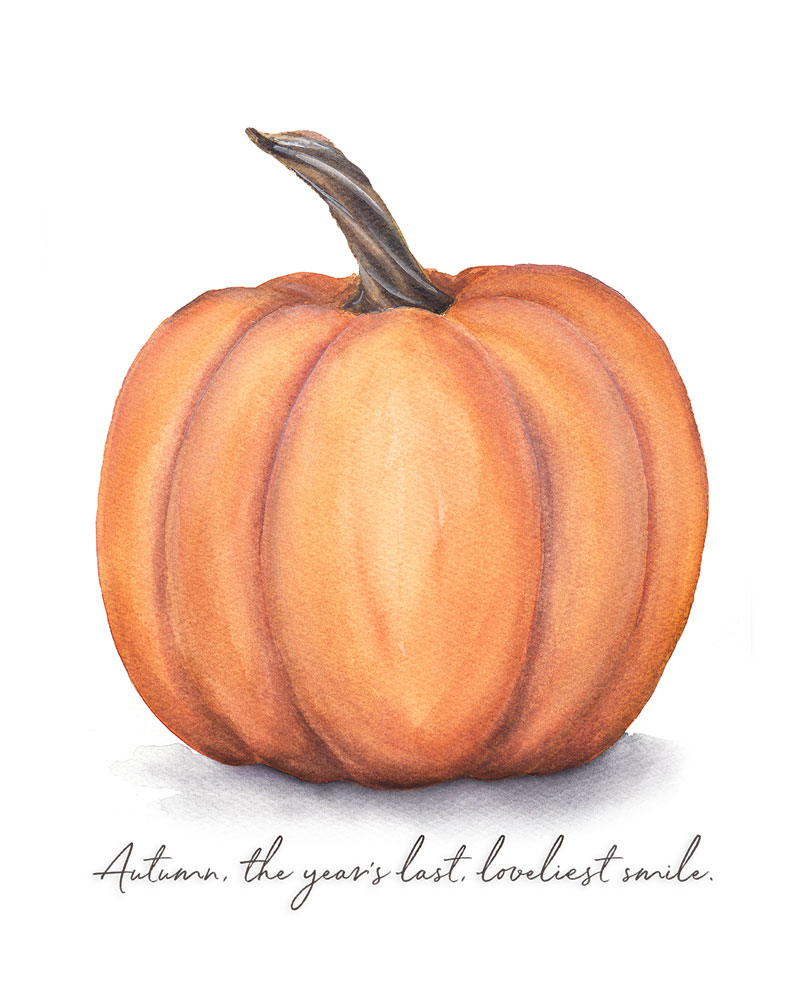 graphic relating to Printable Pumpkin Pictures identified as No cost Autumn Pumpkin Printable Pip Kate