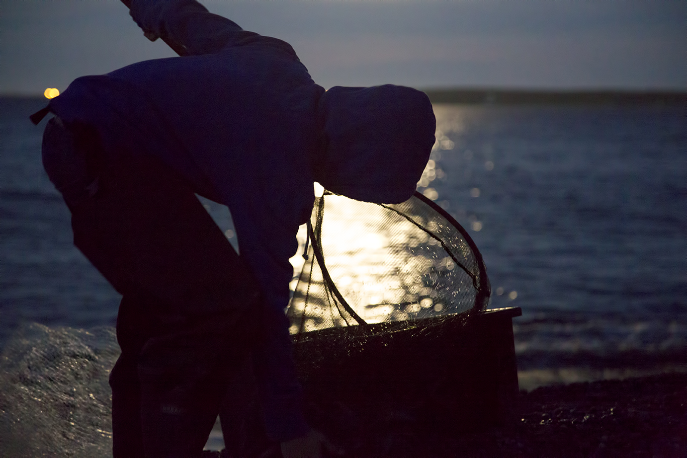 A boy frees the Capelin from his net in Gabarus Bay, Cape Breton