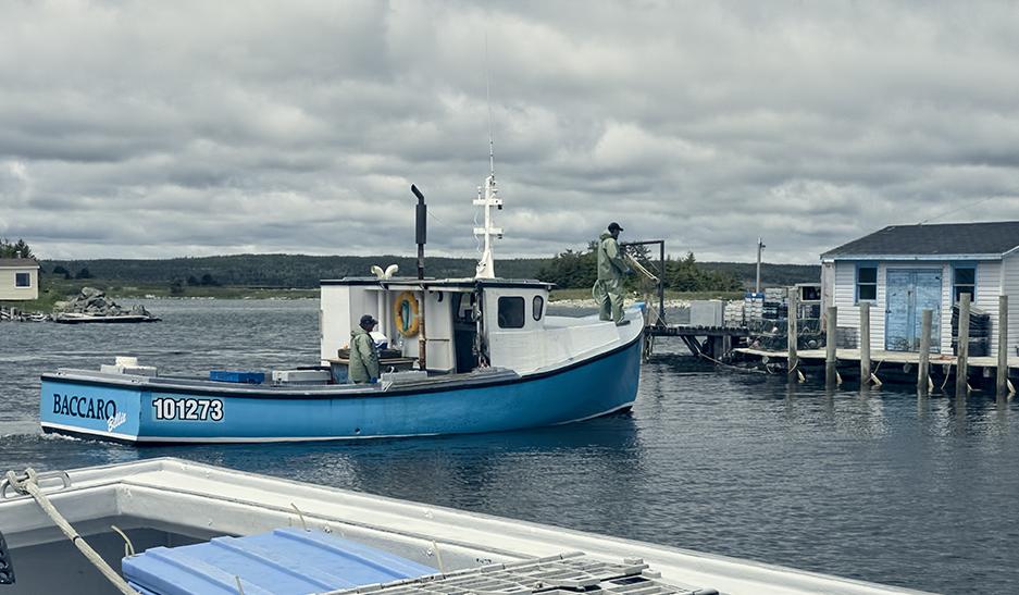 Lobster boat coming into the Gabarus, Cape Breton harbor