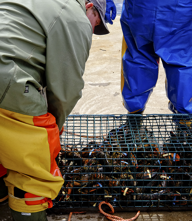 Two lobstermen from Gabarus select lobsters they will sell to villagers on a list to buy lobster tonight.