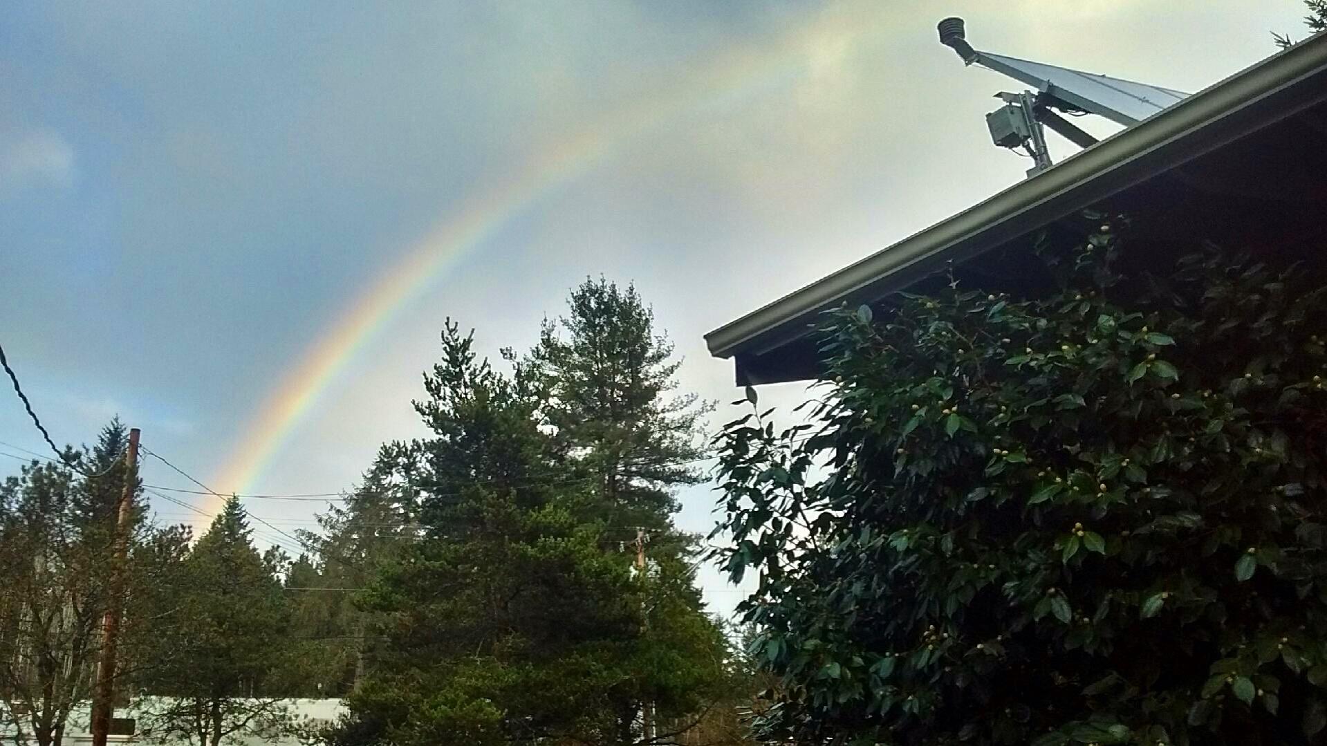 一道彩虹在大发体育在线的树木上闪耀.