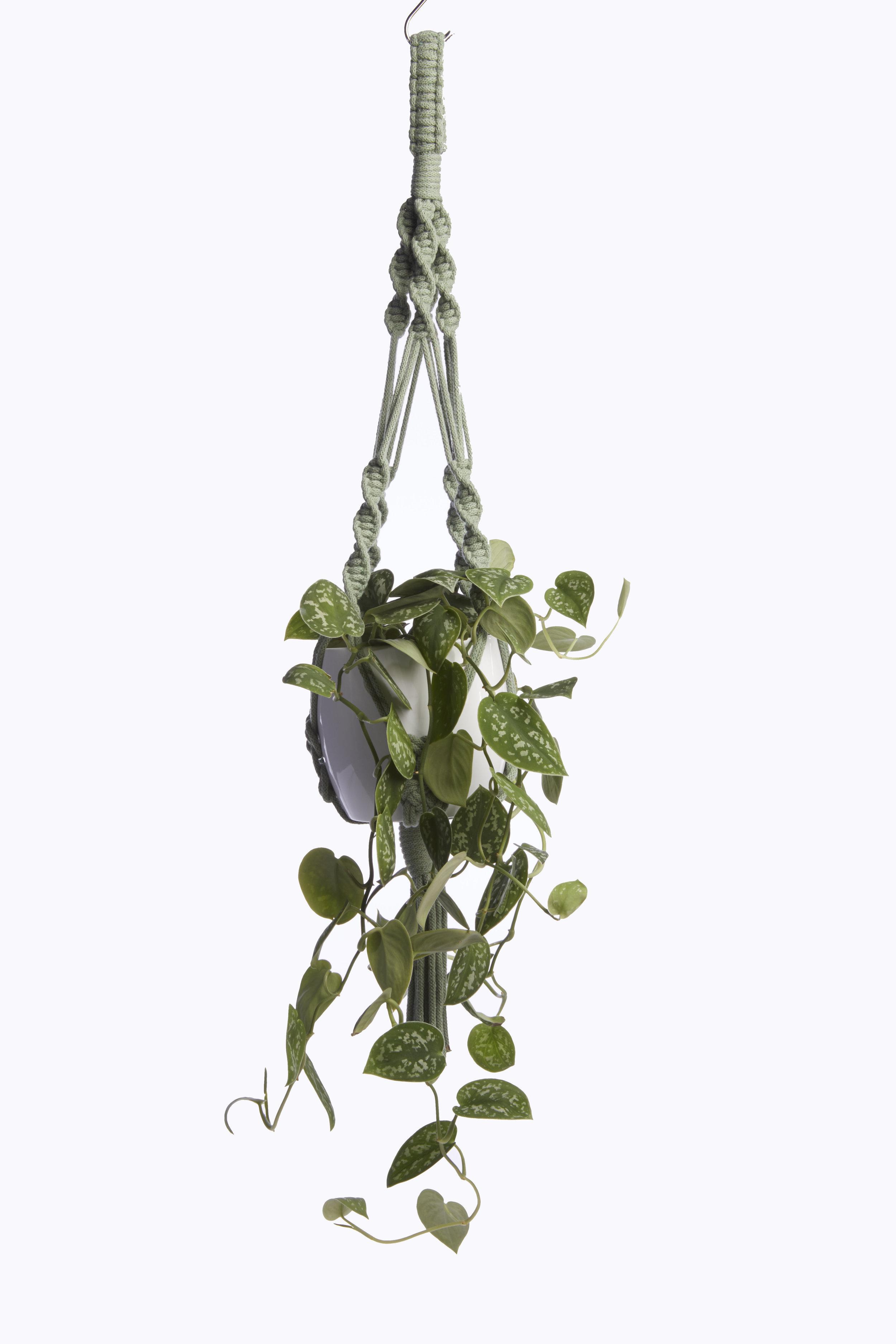 Medium Macrame Plant Hanger Heather Orr