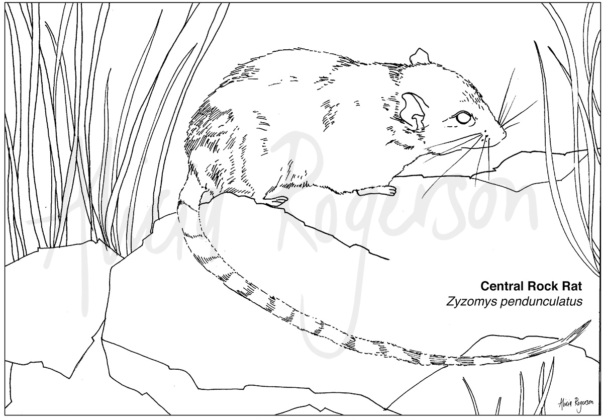 Australian Animals Coloring sheets (teacher made) | 694x1000