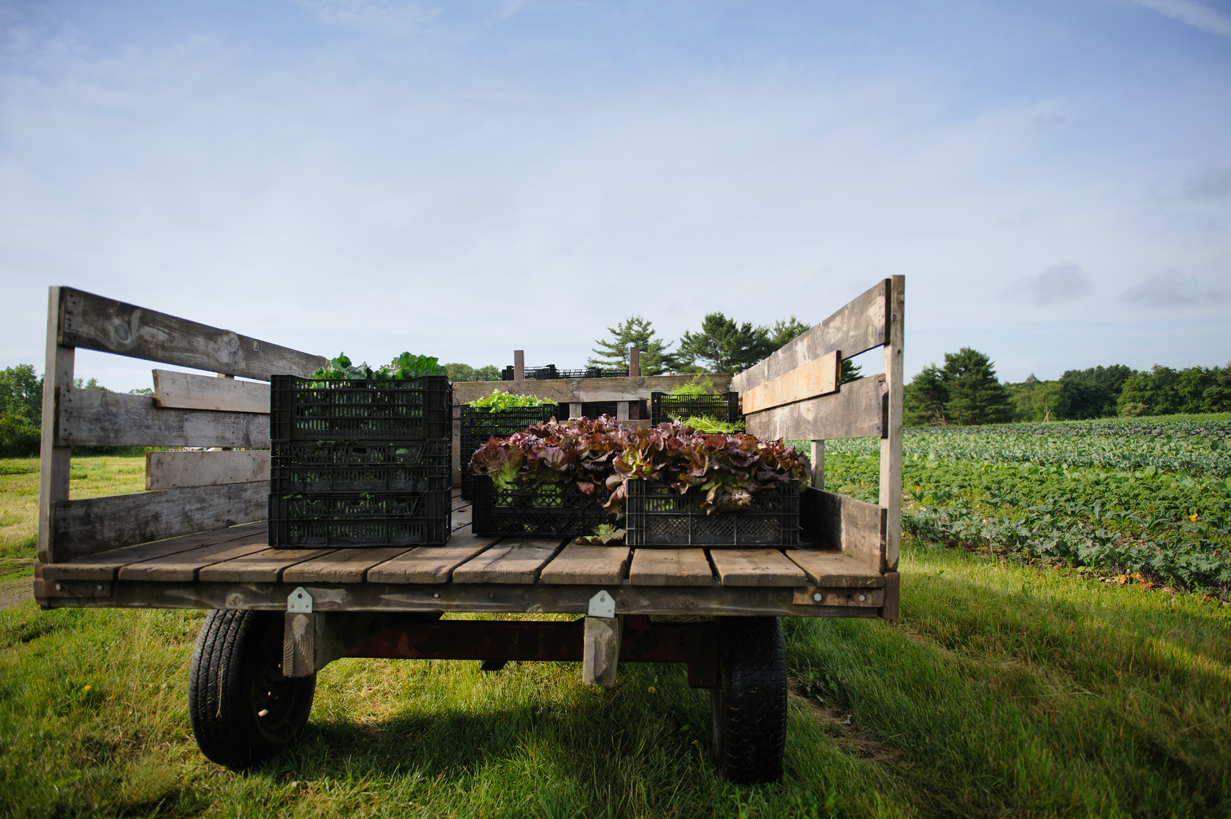truck on farm.jpg