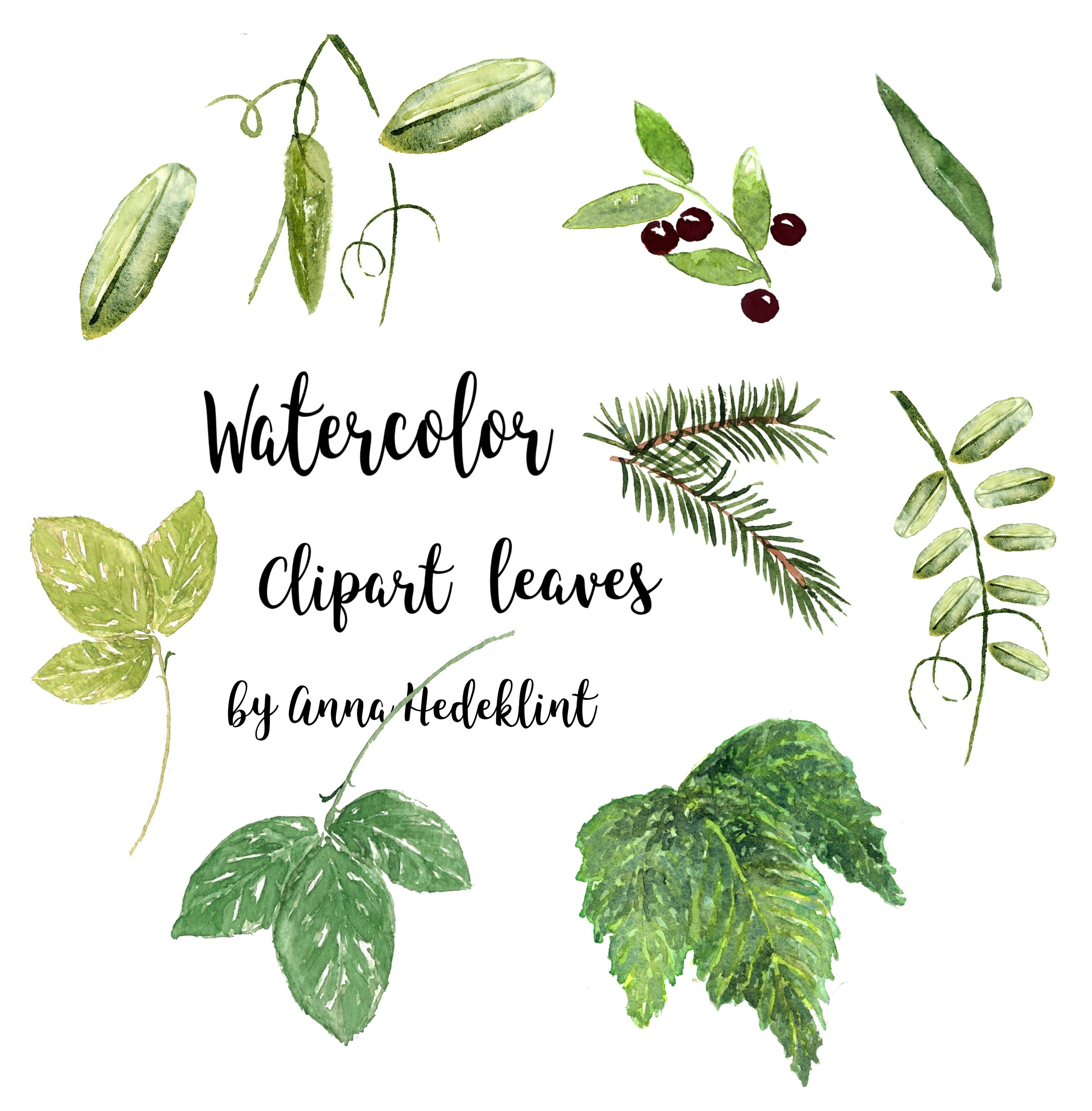 Watercolor Leaves Clipart Template Anna Hedeklint Design Illustration