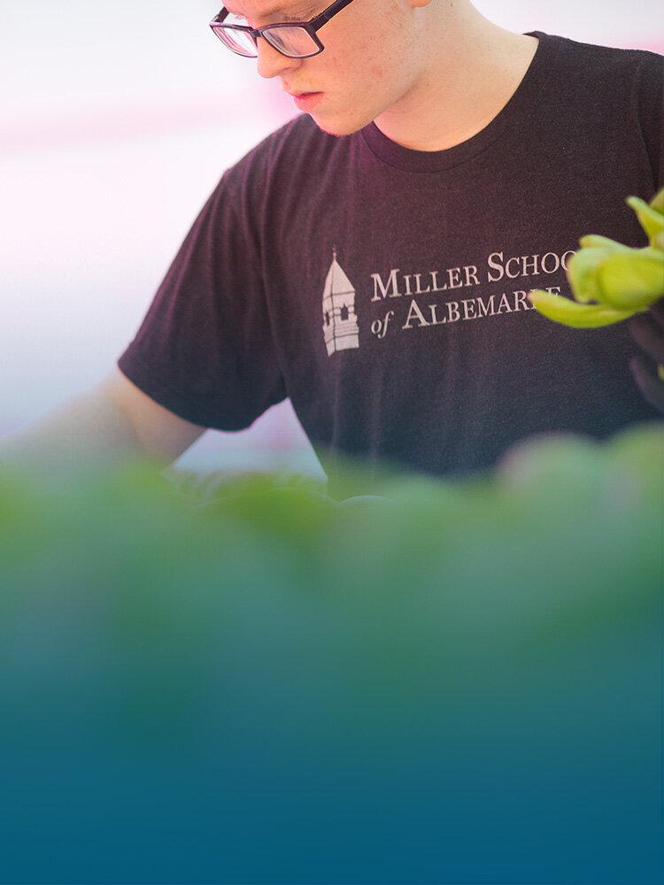 花园-学生研究三种不同的形式的园艺-无耕耘,苗床,和水培