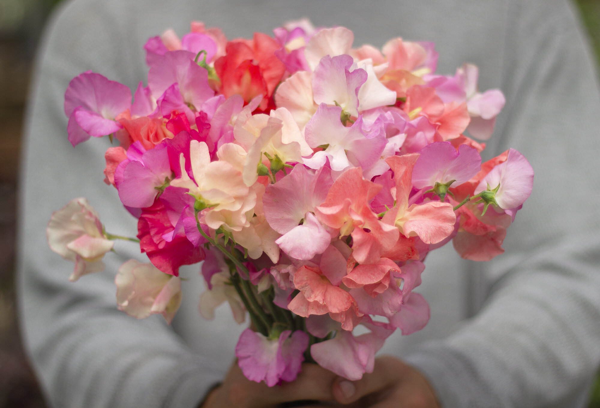 2020 Sweet Pea Bouquet Subscription Scattered Seeds A Flower
