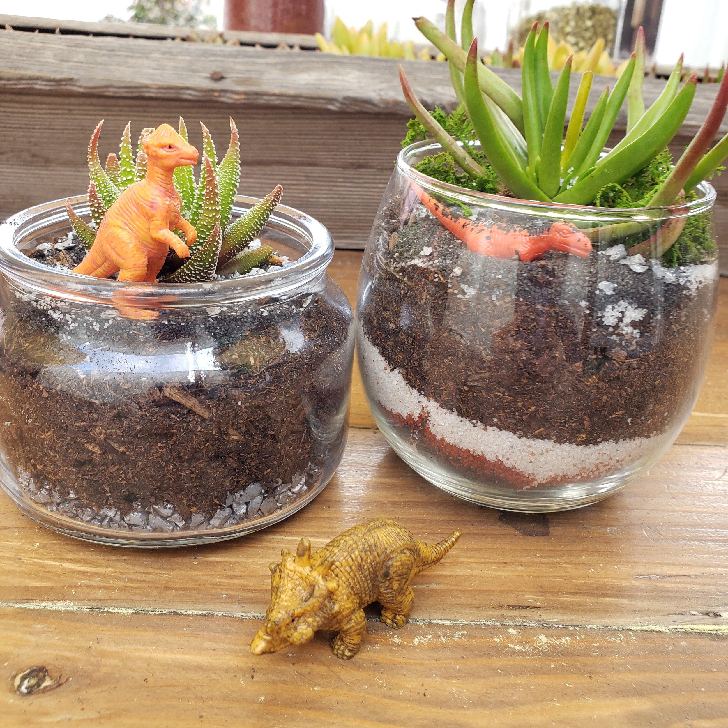 Dinosaur Small Succulent Terrarium Kit Craftiful Make Take Studio