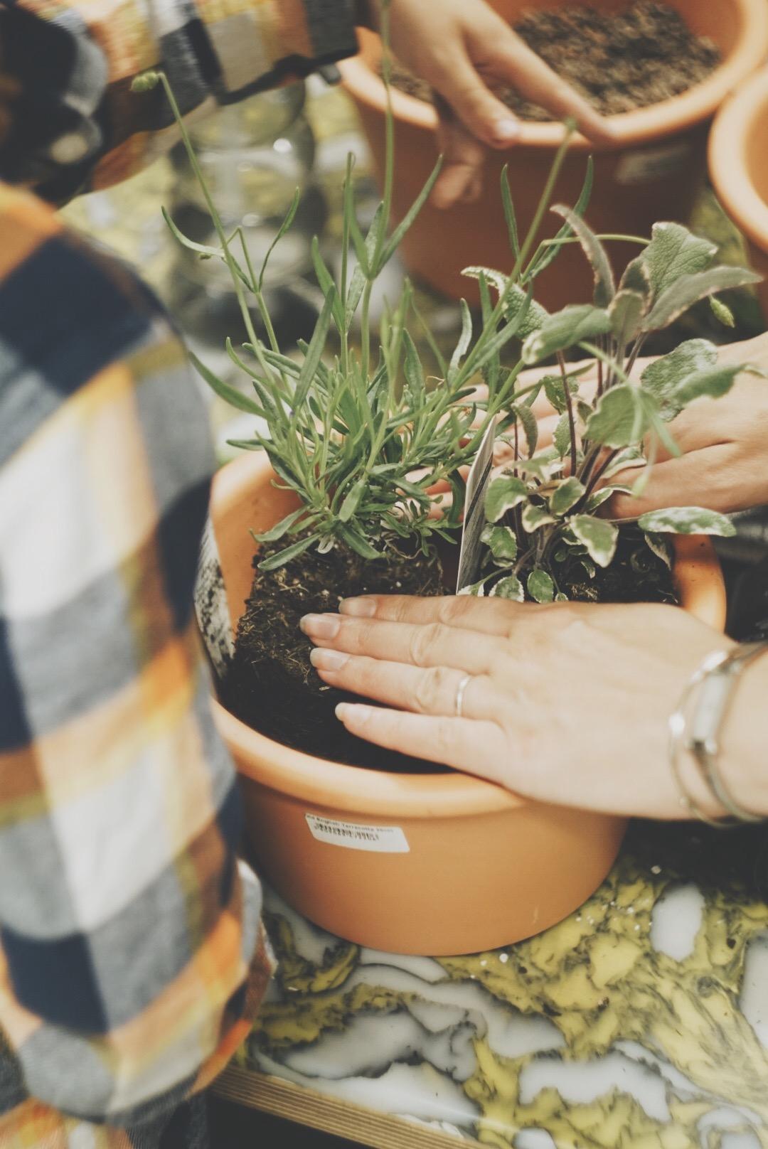 Plant A Mini Herb Garden Haseya