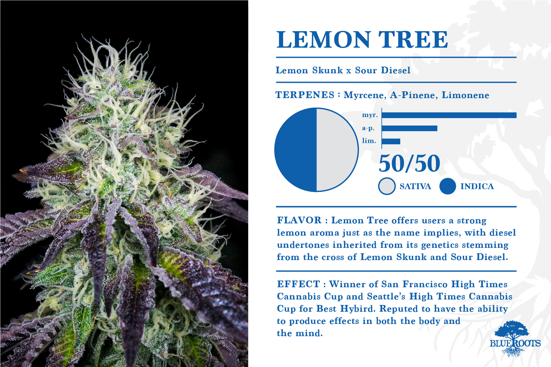 Lemon Tree — Blue Roots Cannabis Co