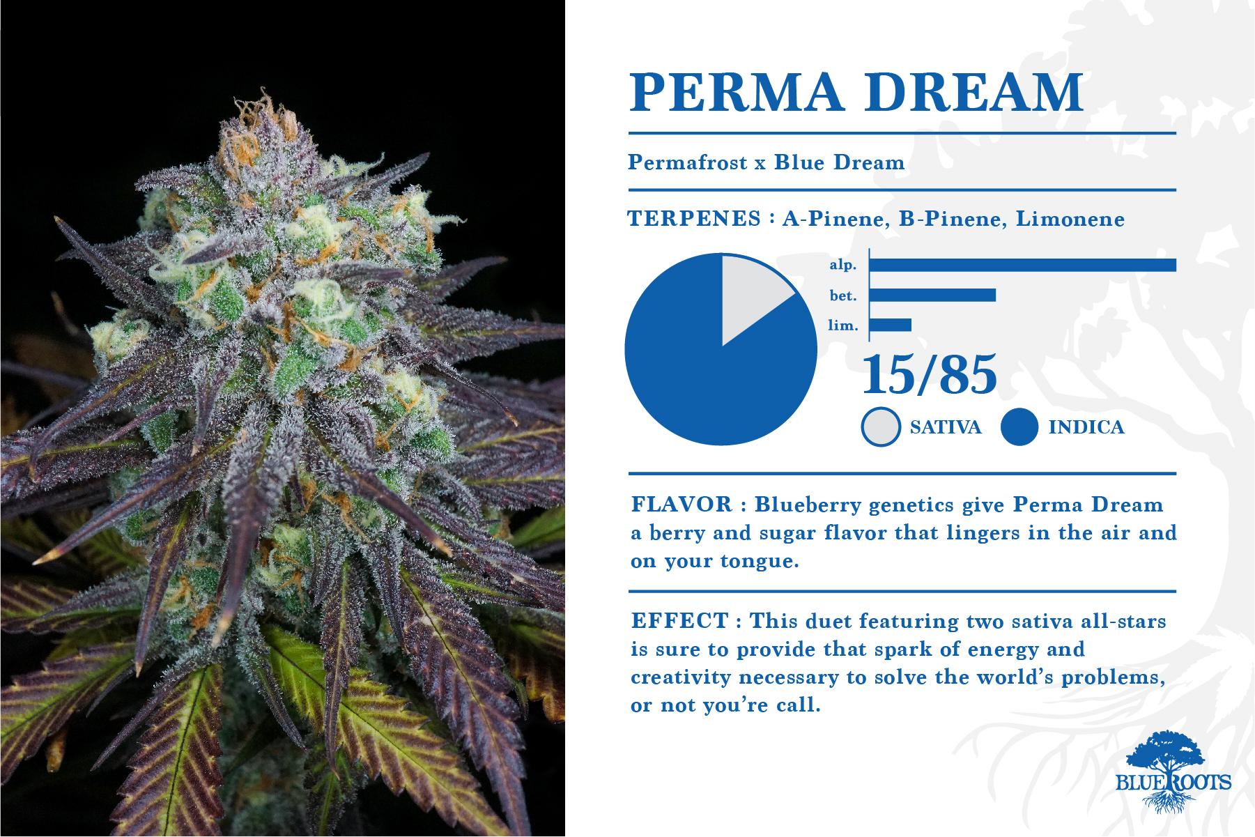 Perma Dream — Blue Roots Cannabis Co