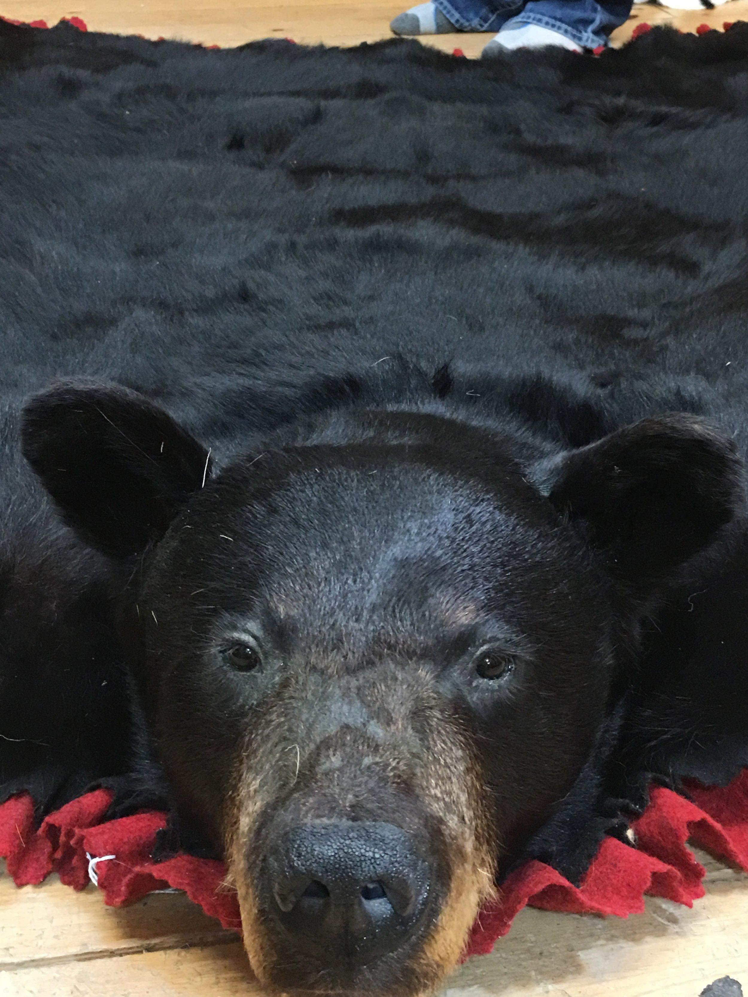 Black Bear Rug — Claw, Antler & Hide Co.