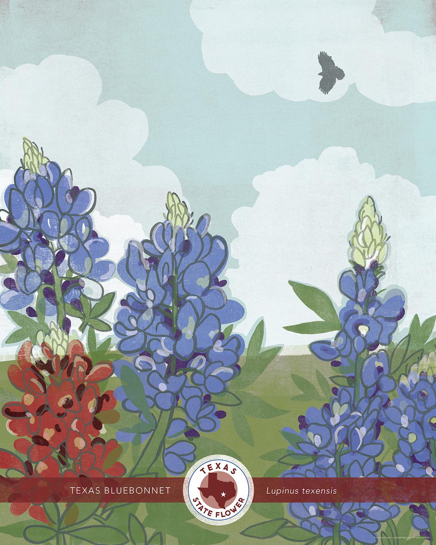 Texas State Flower Illustration Juicebox Designs