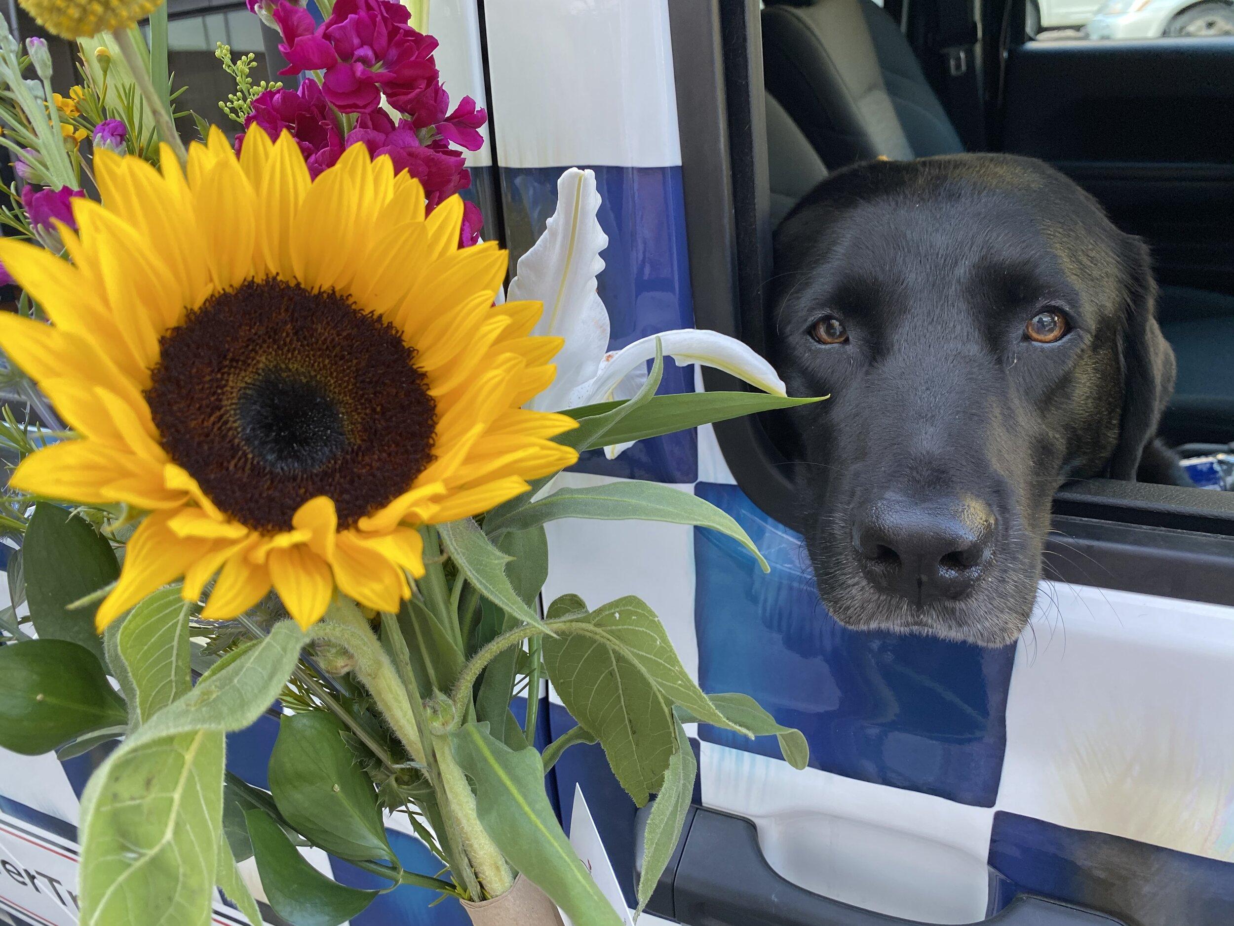 欢迎来到Lily 's -以我们的狗Lily和她最喜欢的花Lily命名的! 我们的目标是在华盛顿、马里兰、弗吉尼亚和其他地方亚慱足彩体育app. 亚慱足彩体育花车里装满了鲜花,你可以制作自己的花束! 我们为每个人服务, 尤其是那些希望为自己的生活增添一抹自然美的人.亚慱足彩体育app喜欢传播快乐,同时支持她的四条腿的朋友们. 我们的一部分利润捐给了当地的动物收容所. 留意亚慱足彩体育app那条狗和她的蓝格子吉普车!