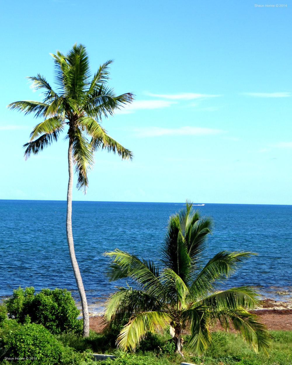 Ocean view near Big Pine Key, FL.
