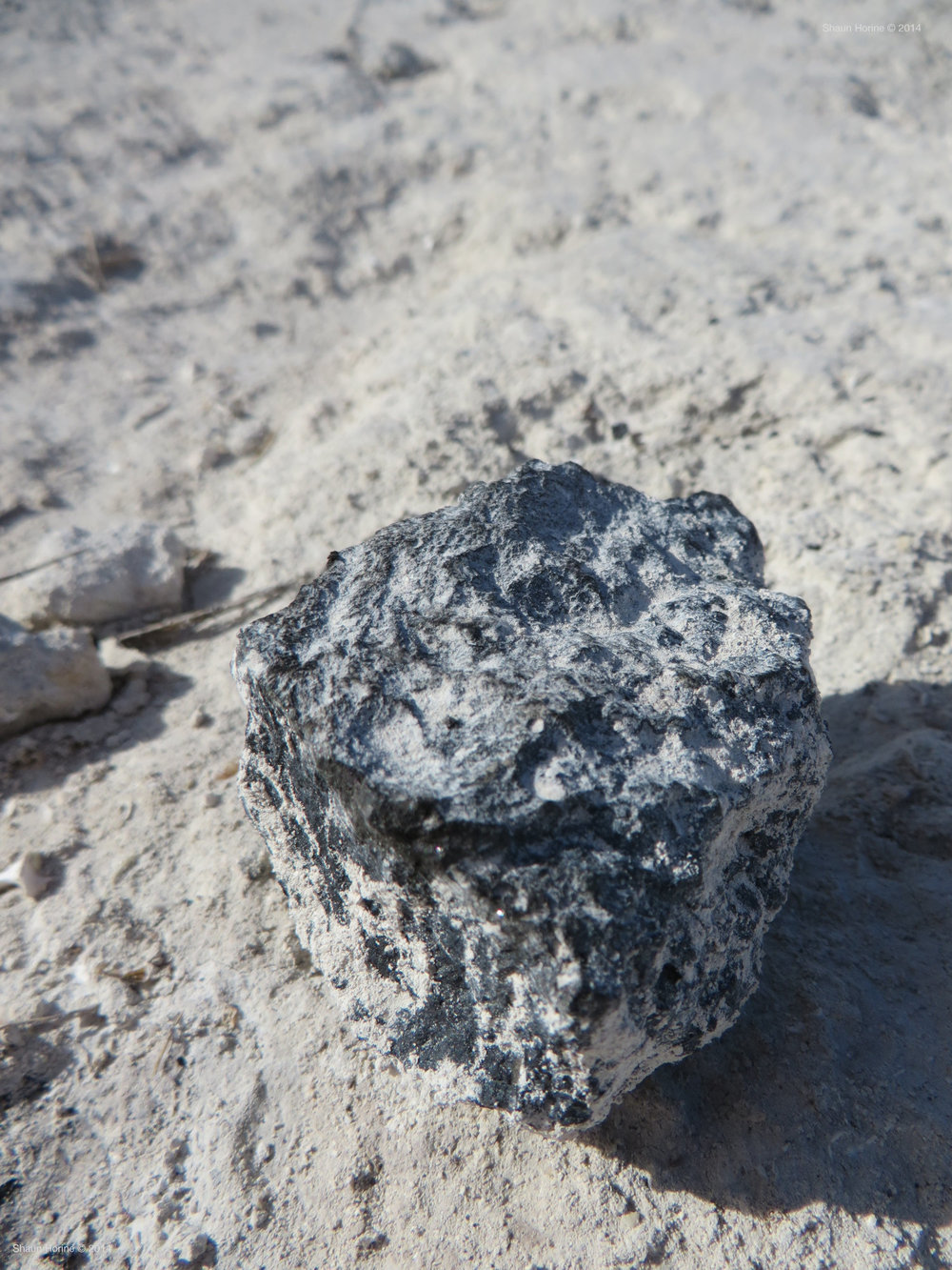 Just a rock in the sand in the Florida Keys.  Macro shot Canon SX280 HS.