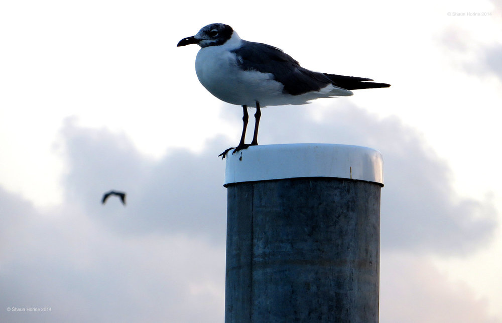 Just a bird on a post in the ocean from our Marathon, FL vacation. Canon SX280 HS
