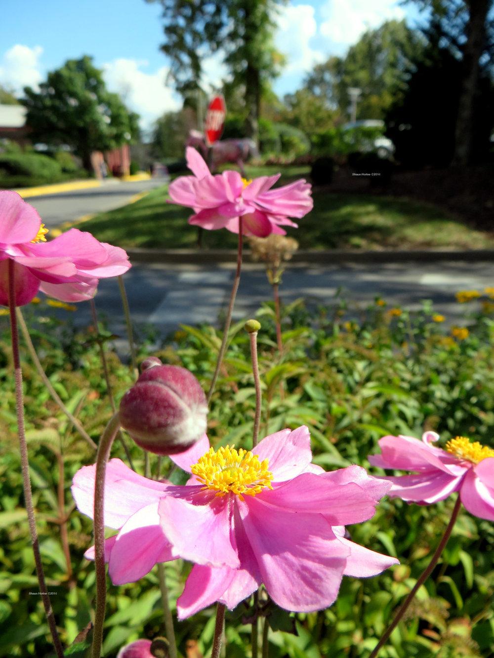 More flowers in the garden waiting area. Baptist Hospital Lexington, KY. Canon SX280 HS