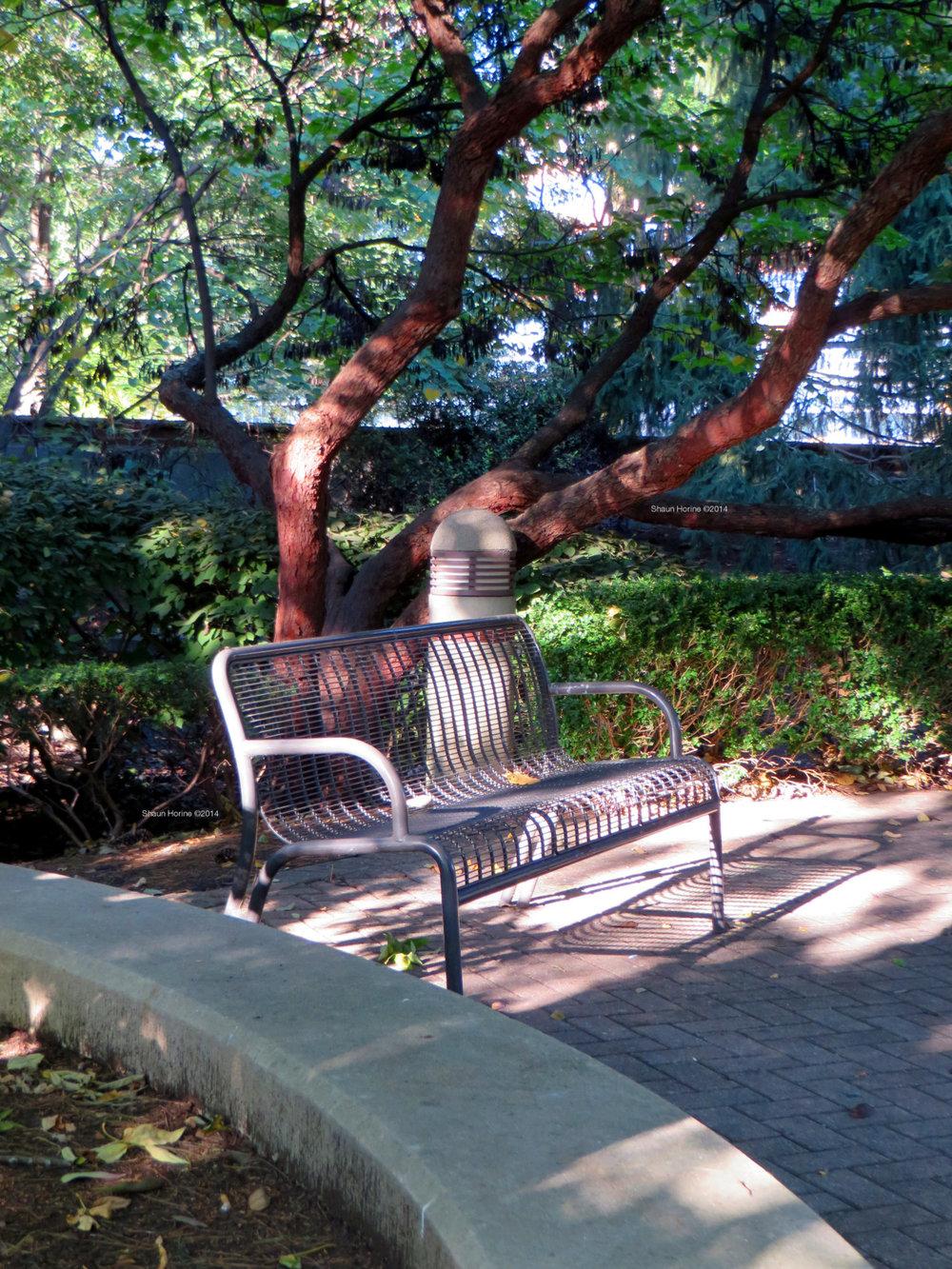 A solo bench under trees in the sunlight. Baptist Hospital Lexington, KY. Canon SX280 HS