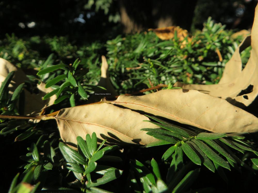 Macro of a few leaves on a bush. Baptist Hospital Lexington, KY. Canon SX280 HS