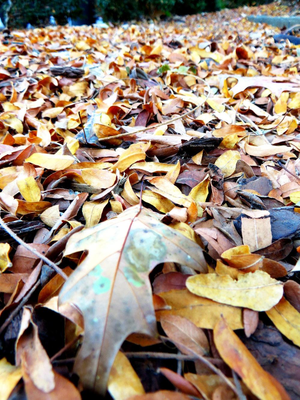 Fall is here. Baptist Hospital Lexington, KY. Canon SX280 HS