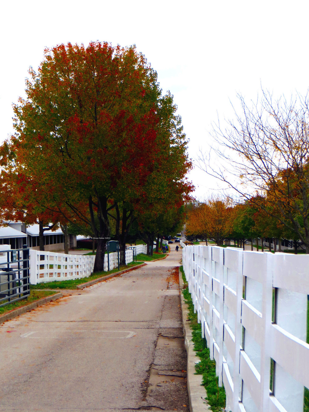 Fall sites at Keeneland's 2014 fall meet.  Keeneland Avenue.