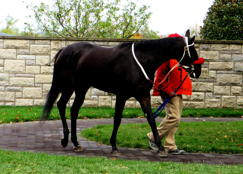 Thoroughbred horses are some exceptional animals.  Keeneland paddock 2014.