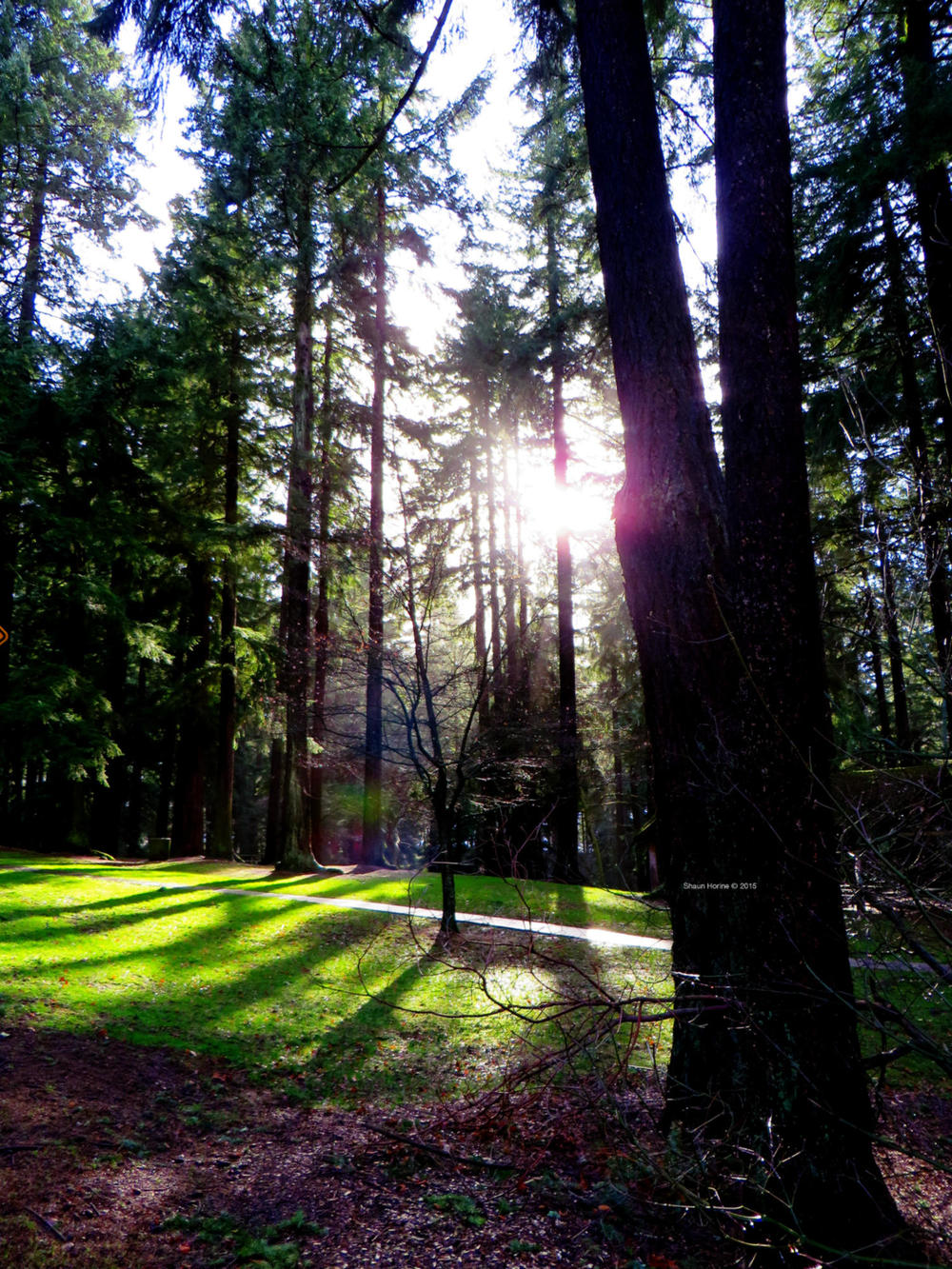 More sunlight pokes through the trees in Mt. Tabor Park, Portland OR.  Canon SX280 HS