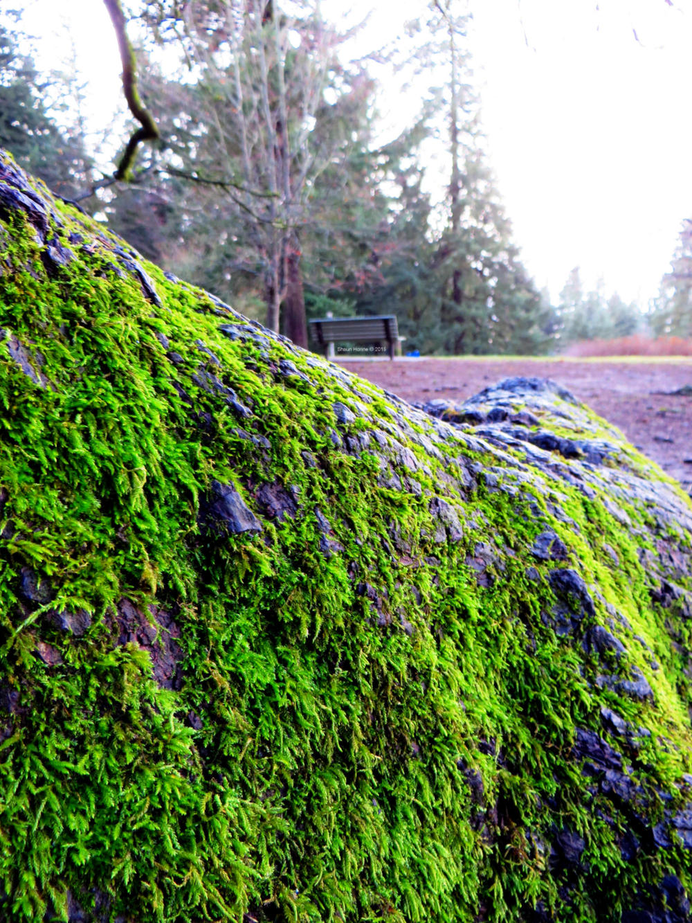 Did I mention moss?  Mt. Tabor Park, Portland OR.  Canon SX280 HS