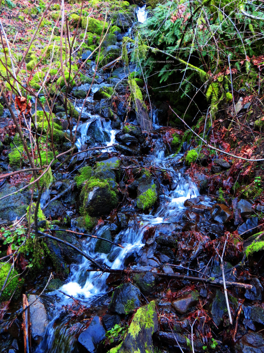 A beautiful stream on the trail up to Multnomah Falls. March 1st, 2015