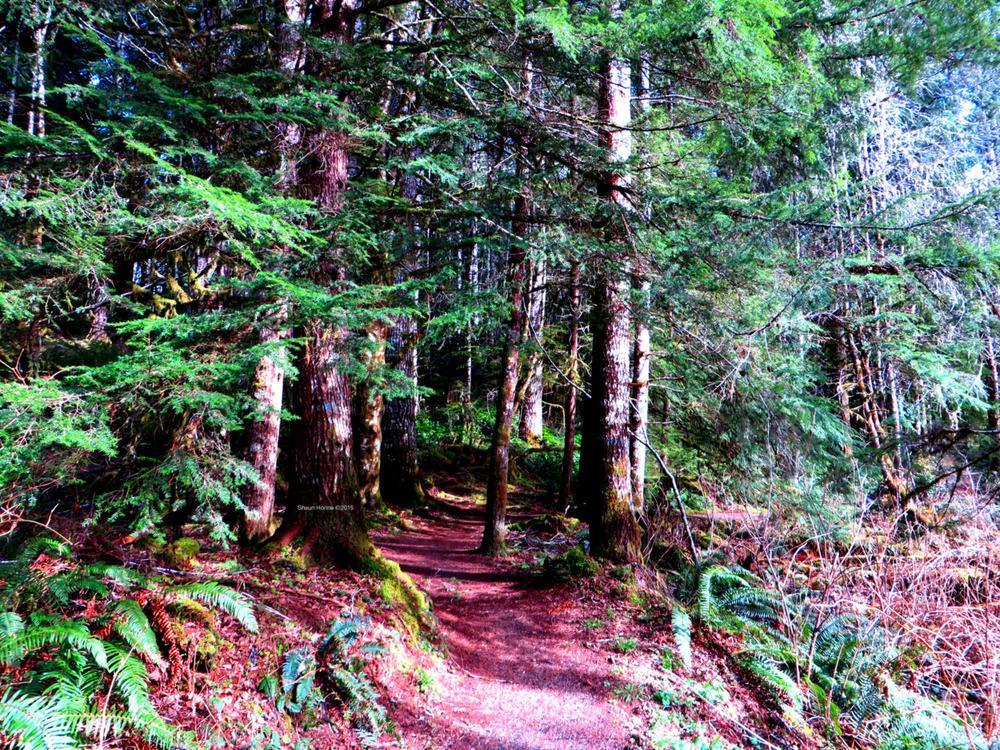 A hiking trail near a rest stop off Oregon 26W. March 1st, 2015