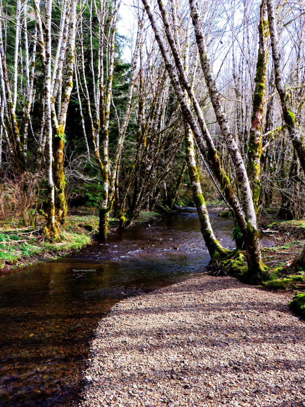 A small creek at the rest stop where we took a break off Oregon 26W. March 1st, 2015
