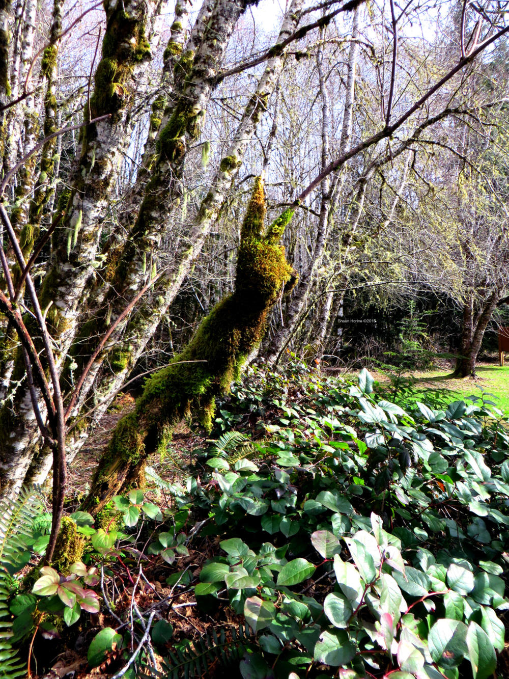A moss bunny in the wild. A rare sight! March 1st, 2015