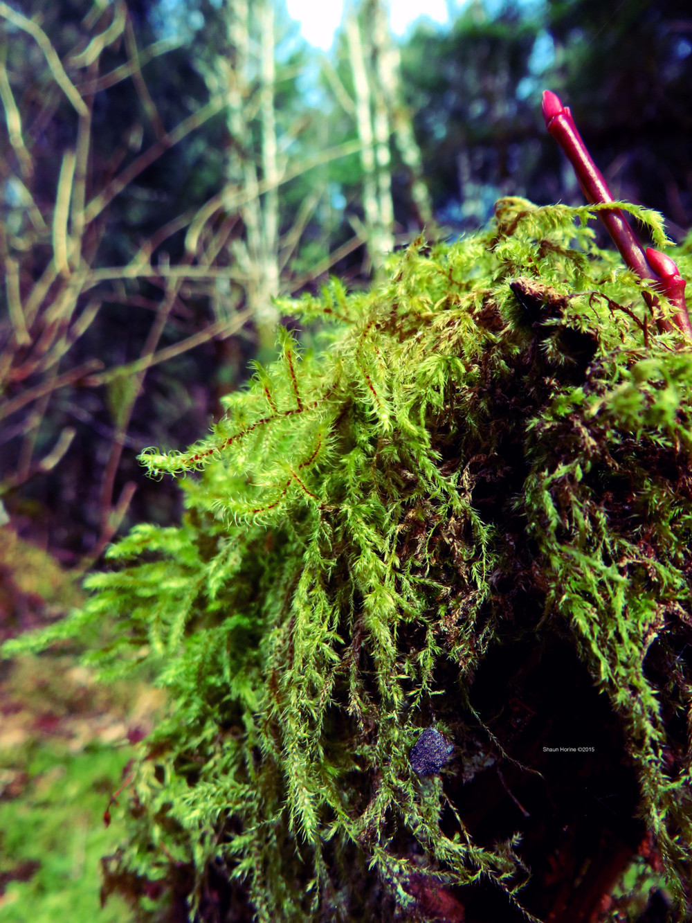 A close-up shot of some gnarly moss on a log. March 1st, 2015