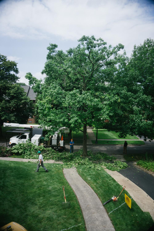 Tree gets a trim