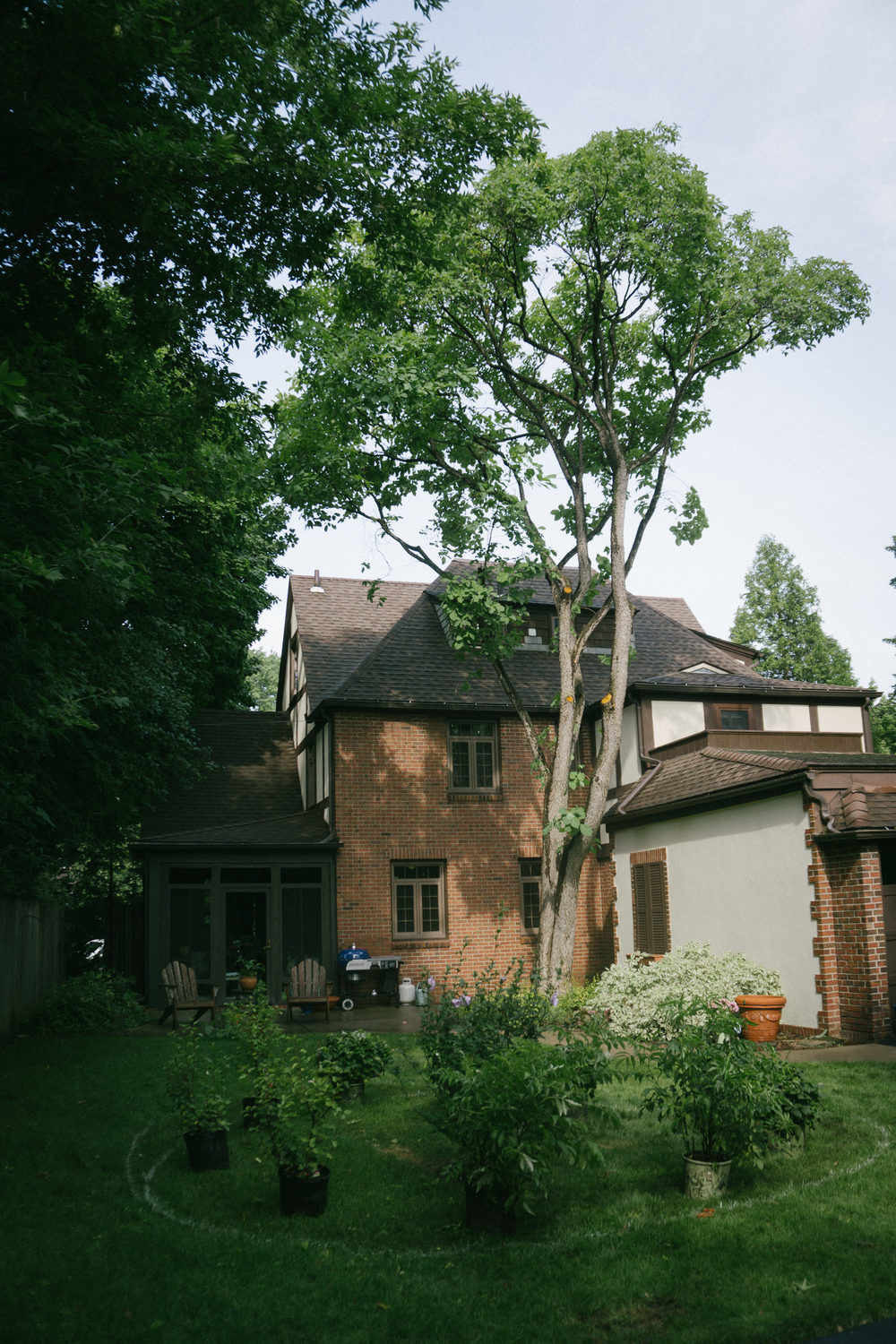 This tree is a type of smokebush and according to an expert at Cornell University, it is very rare to see one this large