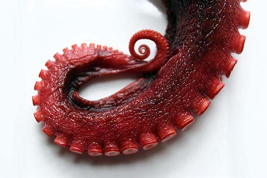 2009_10_13-Octopus.jpg