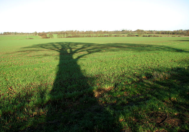 To Google, a website is like a tree and its shadow. Image credit: geograph.org.uk