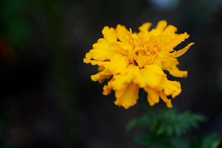 121209yellowflower.jpg