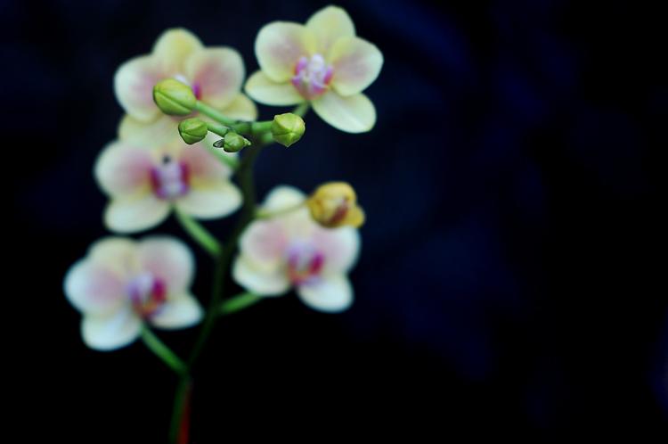 120102orchids.jpg