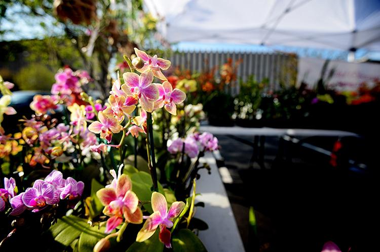 130401orchids1.jpg