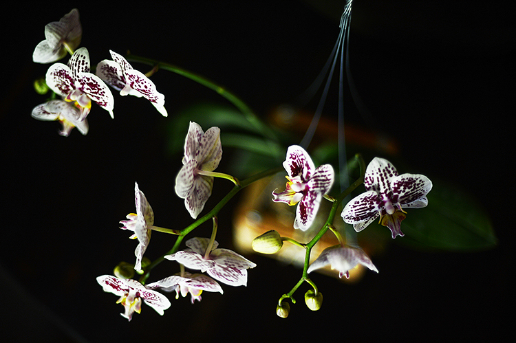 130401orchids4.jpg