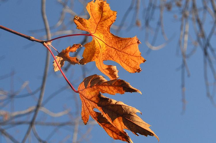 """fall has begun"" by jennifer owens (tulsa, oklahoma, usa)"